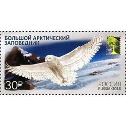2018 Russia Uccelli riserva naturale statale artica Congiunta