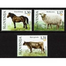 2018 Slovenia Fauna locale - animali domestici