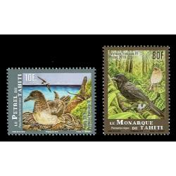 2019 Polinesia francese uccelli di Thaiti