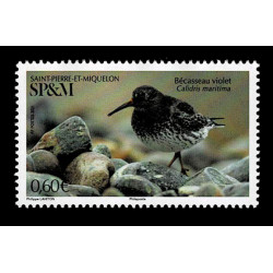 2021 Saint Pierre et Miquelon SP&M uccelli acquatici - limicolo